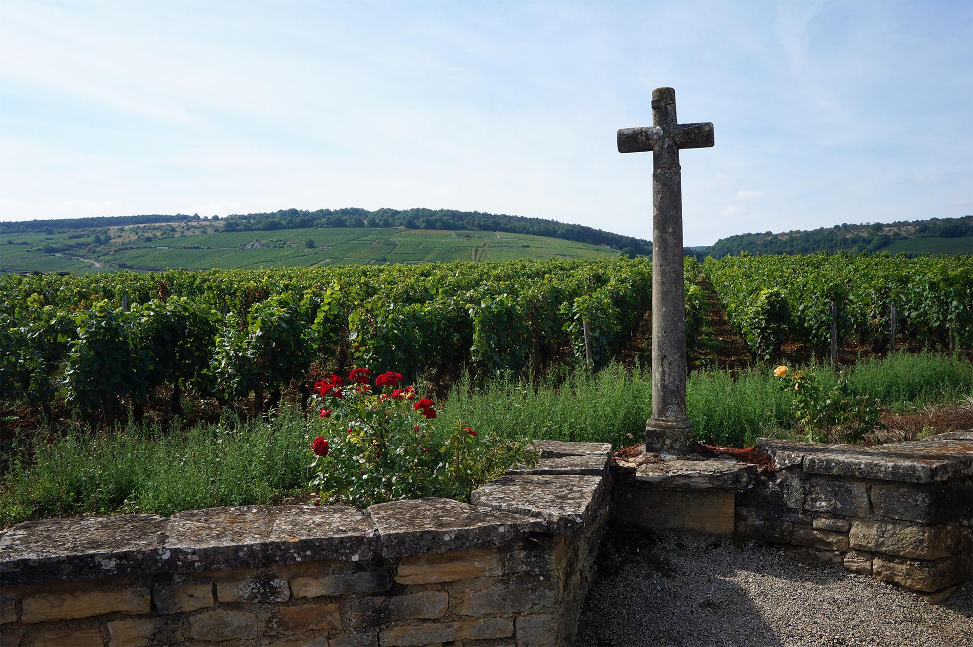 longform wine 7